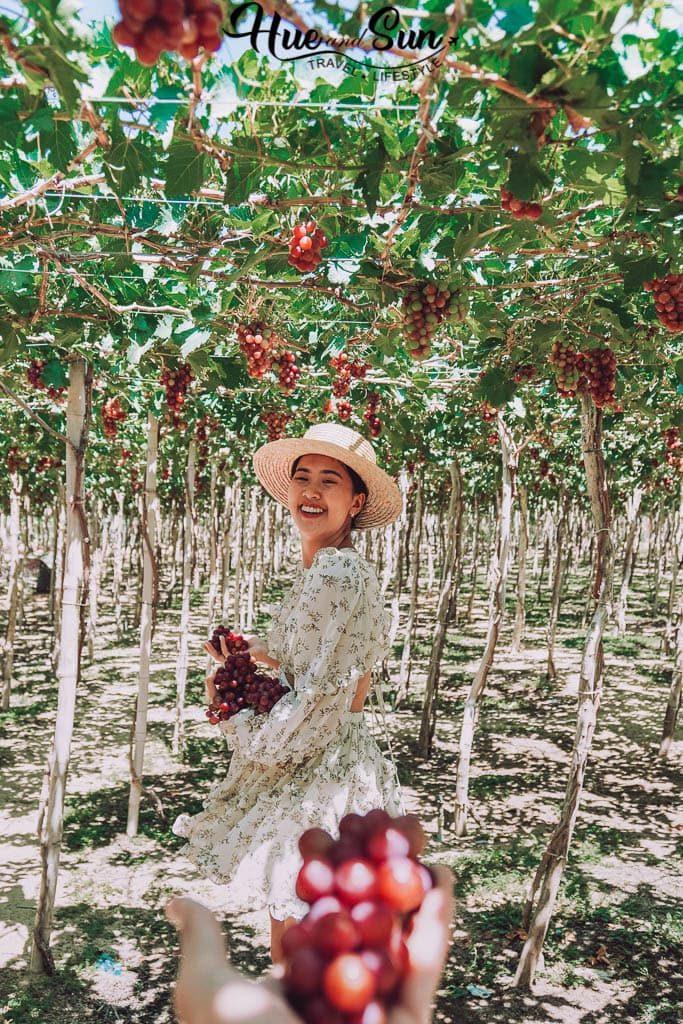 đến Phan Rang nên đi trang trại nho nào